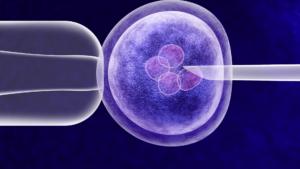 In vitro procedure SD