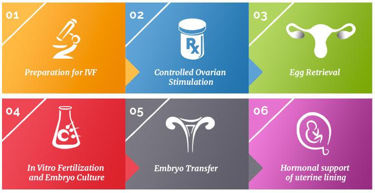 6 steps of IVF